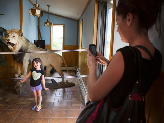 Despite Controversy, Canandaigua Pizzeria to Keep Mounted Lion